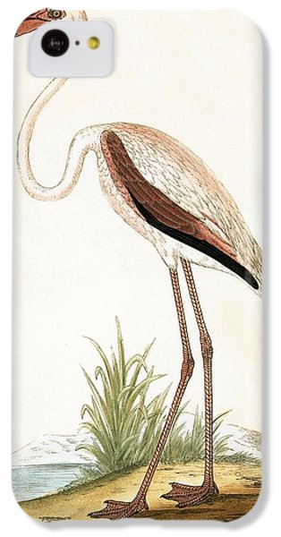 Rosy Flamingo IPhone 5c Case by English School
