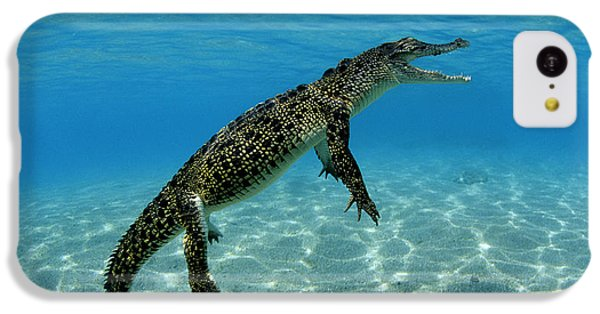 Saltwater Crocodile IPhone 5c Case by Franco Banfi and Photo Researchers