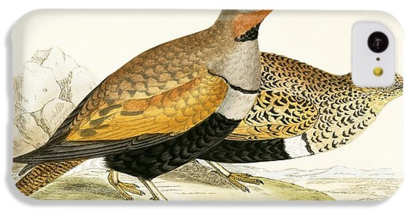 Sand Grouse IPhone 5c Case by English School