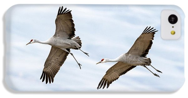 Sandhill Crane Approach IPhone 5c Case by Mike Dawson