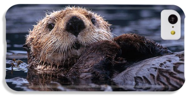 Sea Otter IPhone 5c Case by Yva Momatiuk and John Eastcott and Photo Researchers