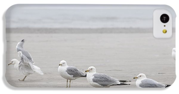 Seagulls On Foggy Beach IPhone 5c Case by Elena Elisseeva