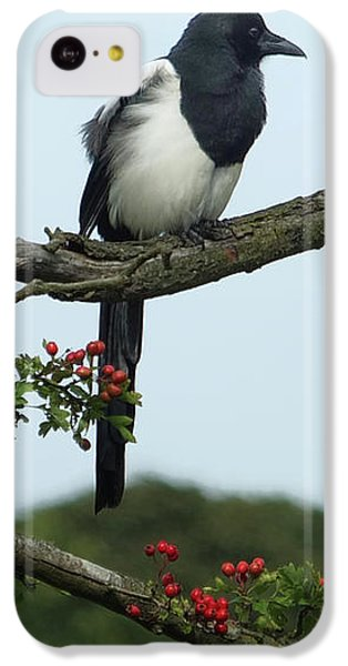 September Magpie IPhone 5c Case by Philip Openshaw