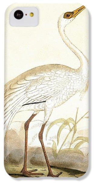 Siberian Crane IPhone 5c Case by English School