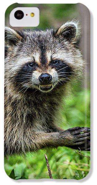 Smiling Raccoon IPhone 5c Case by Paul Freidlund