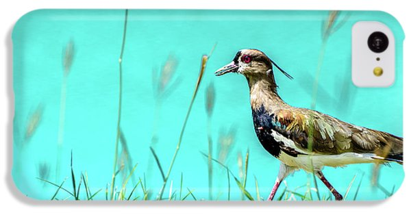 Southern Lapwing IPhone 5c Case by Randy Scherkenbach