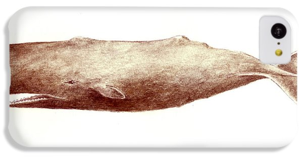 Sperm Whale IPhone 5c Case by Michael Vigliotti