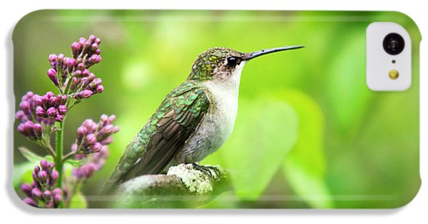 Spring Beauty Ruby Throat Hummingbird IPhone 5c Case by Christina Rollo