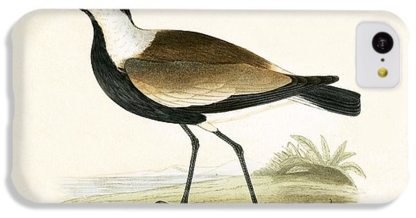 Spur Winged Plover IPhone 5c Case by English School
