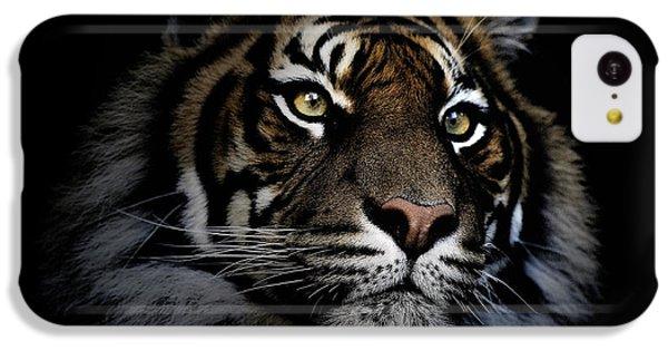 Sumatran Tiger IPhone 5c Case by Avalon Fine Art Photography