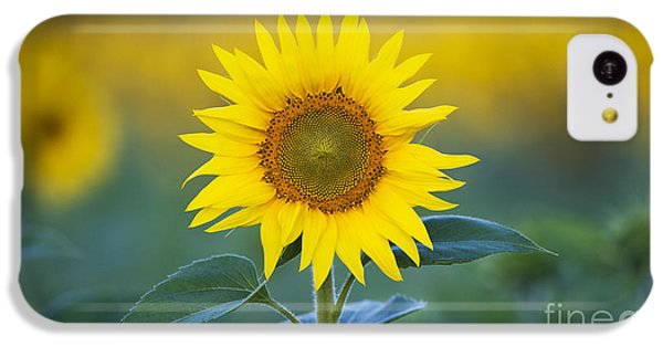 Sunflower IPhone 5c Case by Tim Gainey