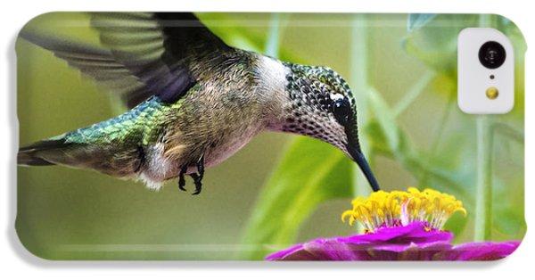 Sweet Success Hummingbird Square IPhone 5c Case by Christina Rollo