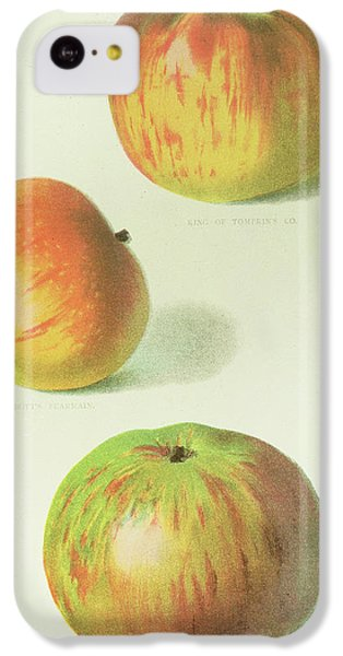 Three Apples IPhone 5c Case by English School