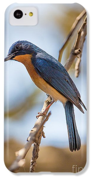 Tickells Blue Flycatcher, India IPhone 5c Case by B. G. Thomson
