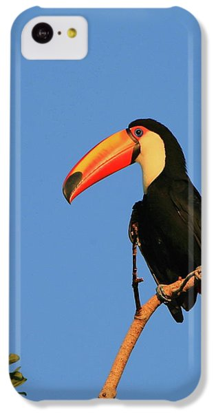 Toco Toucan IPhone 5c Case by Bruce J Robinson