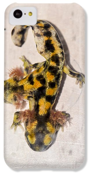 Two-headed Near Eastern Fire Salamande IPhone 5c Case by Shay Levy