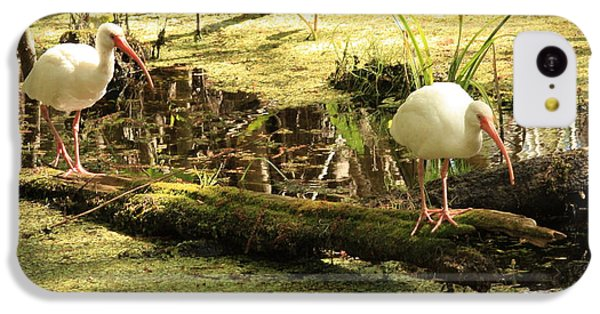 Two Ibises On A Log IPhone 5c Case by Carol Groenen