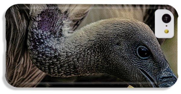 Vulture IPhone 5c Case by Martin Newman