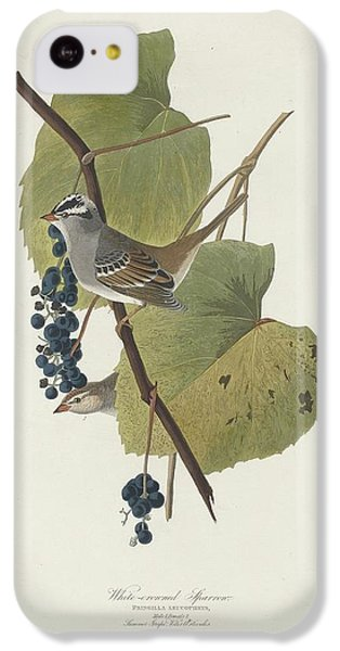 White-crowned Sparrow IPhone 5c Case by John James Audubon