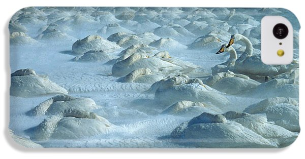 Whooper Swans In Snow IPhone 5c Case by Teiji Saga and Photo Researchers