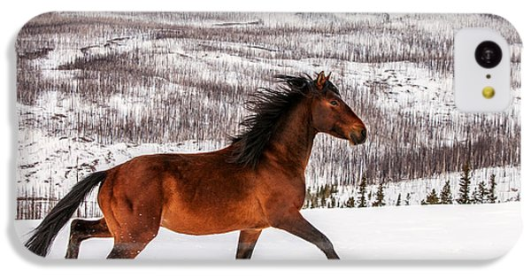 Wild Horse IPhone 5c Case by Todd Klassy