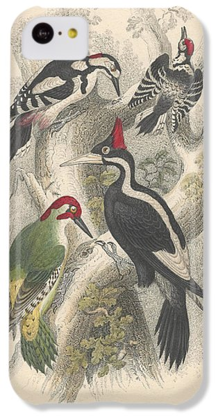Woodpeckers IPhone 5c Case by Oliver Goldsmith
