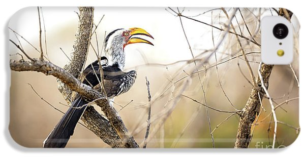 Yellow-billed Hornbill Sitting In A Tree.  IPhone 5c Case by Jane Rix