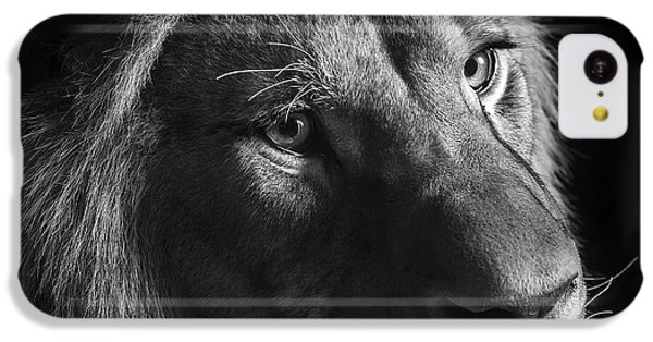 Young Lion In Black And White IPhone 5c Case by Lukas Holas