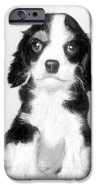 Cute Puppy iPhone Cases - # 12 Cavalier King Charles Spaniel puppy iPhone Case by Alan Armstrong