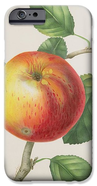 Garden iPhone Cases -  An Apple iPhone Case by Elizabeth Jane Hill