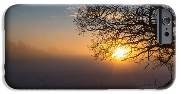 Sunset In Norway iPhone Cases -  Sunbeams pour through the tree at the misty winter sunrise iPhone Case by Aldona Pivoriene