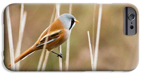 Beard iPhone Cases -  Bearded Tit iPhone Case by Ian Hufton