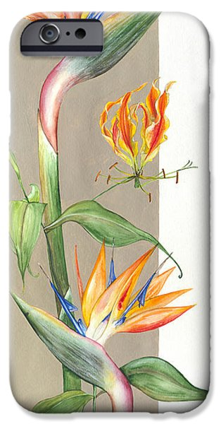 Flora Drawings iPhone Cases -  Bird of paradise 09 Elena Yakubovich iPhone Case by Elena Yakubovich
