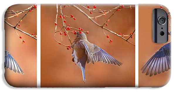 Berry iPhone Cases -  Bluebird Click Click Click iPhone Case by Randall Branham