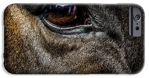 Thoroughbred iPhone Cases -  Bright Eyes - Horse Portrait iPhone Case by Holly Martin