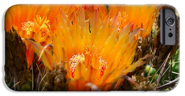 Print Glass iPhone Cases -  Candy Barrel Cactus iPhone Case by Beverly Guilliams