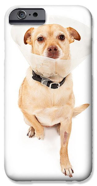 Surgery iPhone Cases -  Chihuahua Mix Dog With Cone  iPhone Case by Susan  Schmitz