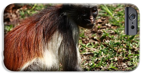 Best Sellers -  - Mangrove Forest iPhone Cases -  Colobus Monkey iPhone Case by Aidan Moran
