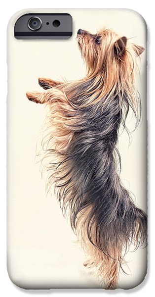 Begging iPhone Cases -  Dancing Yorkshire Terrier iPhone Case by Susan Stone