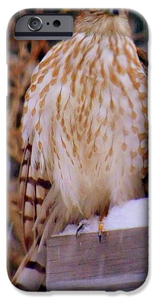 New England Snow Scene iPhone Cases - Coopers Hawk Flew In With The Winter Storm iPhone Case by Eunice Miller