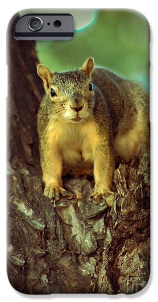 Fox Squirrel iPhone Cases -  Fox Squirrel iPhone Case by Robert Bales