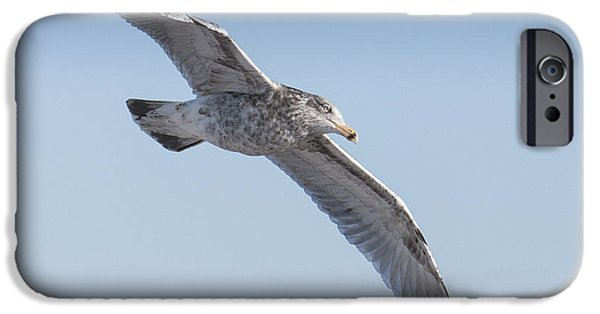 Sea Birds iPhone Cases -  Gull Friend iPhone Case by Ross Powell