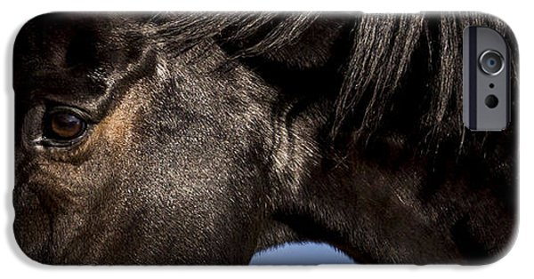 Horse iPhone Cases -  Horse - Dark Bay I iPhone Case by Holly Martin