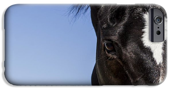 Canvas Photographs iPhone Cases -  Horse - Dark Bay II iPhone Case by Holly Martin