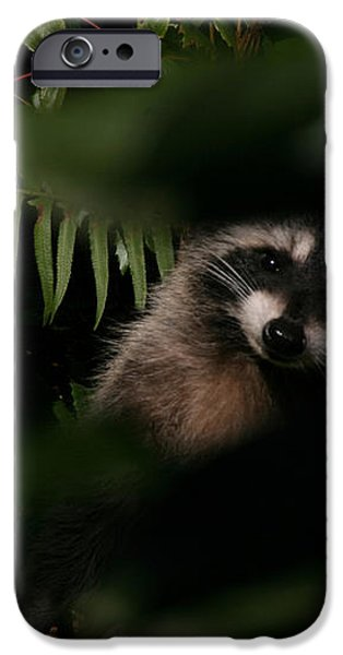 I Can See You  Mr. Raccoon iPhone Case by Kym Backland