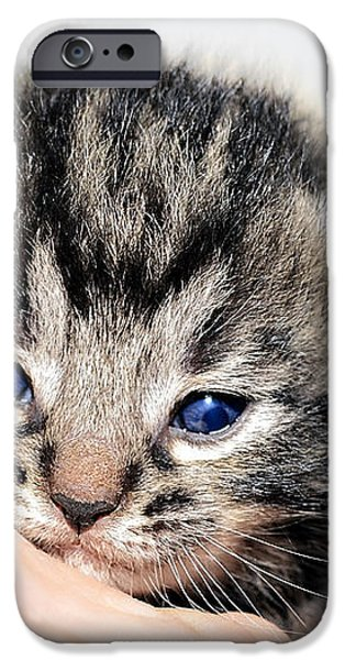 Kitten in a Hand iPhone Case by Susan Leggett