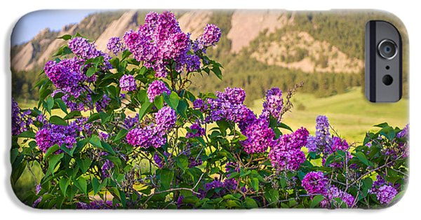 Lilac Flower iPhone Cases -  Lilac Flowers - Boulder Colorado iPhone Case by Aaron Spong