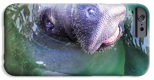 Manatee iPhone Cases -  Manatee World iPhone Case by Karen Wiles