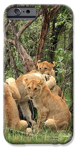 East Africa Photographs iPhone Cases -  Masai Mara Lion Cubs iPhone Case by Aidan Moran