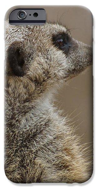 Meerkat iPhone Case by Ernie Echols